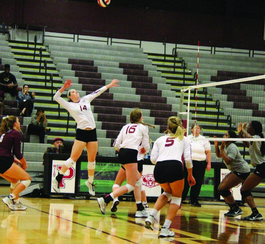Senior Jaclyn Childress, number 14, is about to slam the ball over the net as her teammates move in for support at the Plano vs Lewisville game where the Wildcats were victorious with a score of 3-0.  (Photo by Ashlee Salfelder)