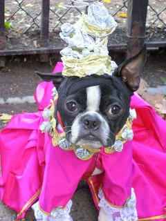 Adorable dog dressed in a princess costume from head to tail