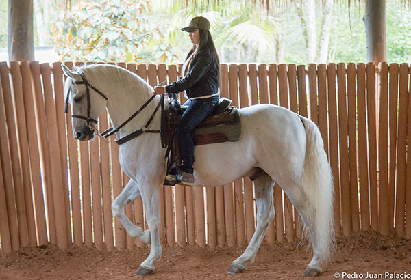 Horseback riding burns up to 200 calories per 45 minutes according to Dr. Dennis Sigler of Texas A&M Department of Animal Science.